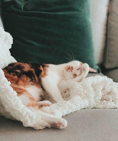 adorable-animal-animal-photography-2401960