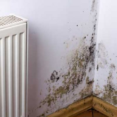 cavity-extraction-mildew